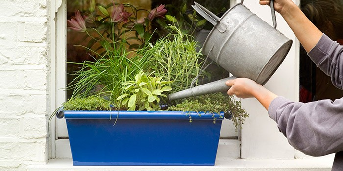 20 Herb Garden And Vegetable Garden Ideas 2021 Bbc Good Food Bbc Good Food