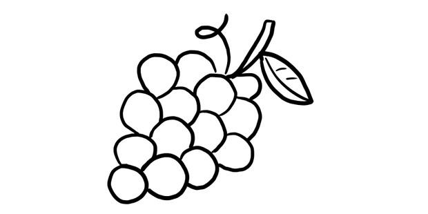 grapes illustration
