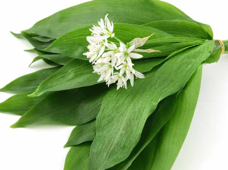 How to use wild garlic