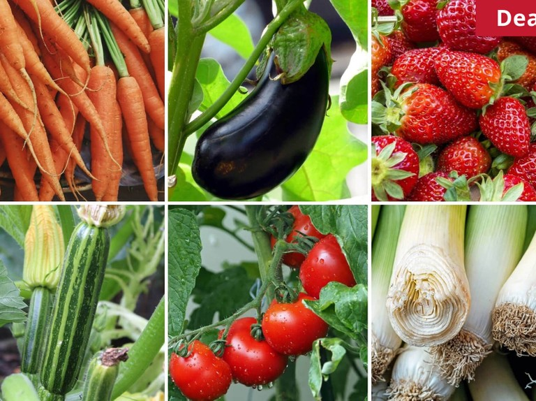 Enjoy 10% off all Grow Your Own Veg products