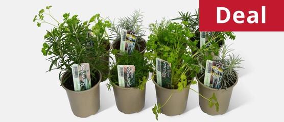 Kitchen Classics Herb Pack