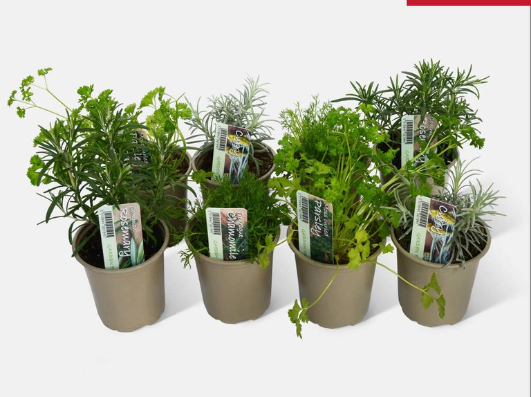 Save 17% on Kitchen Classic Herb plants