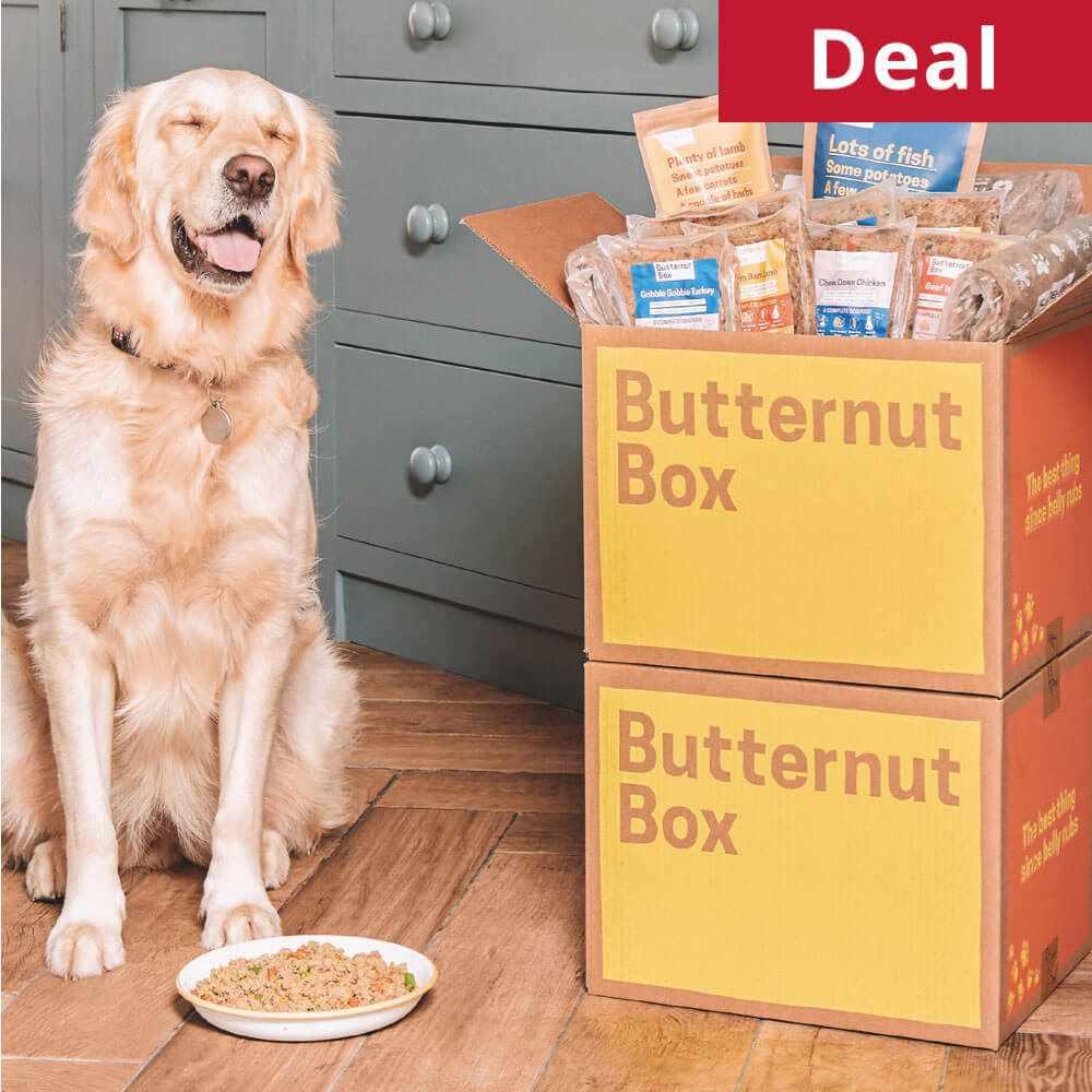 Butternut Box and dog