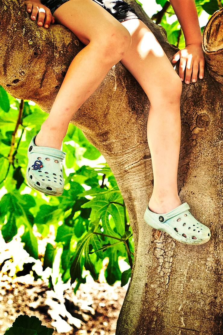 Why do children love climbing trees?