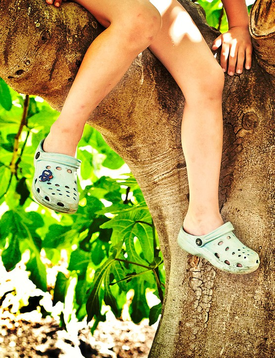 Why do children love climbing trees?