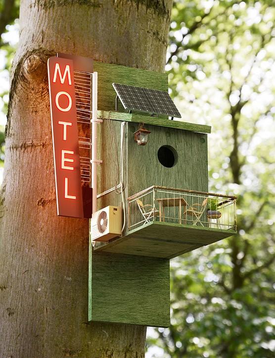 Ten ways to attract wildlife this spring