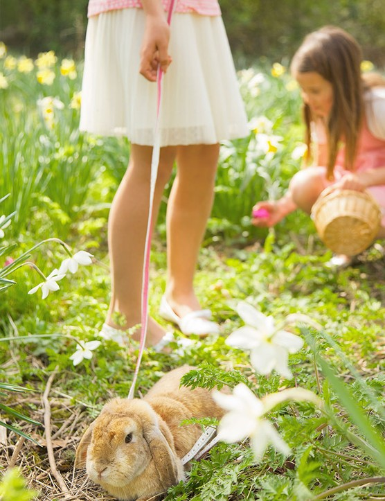 Tips for how to have a successful Easter egg hunt