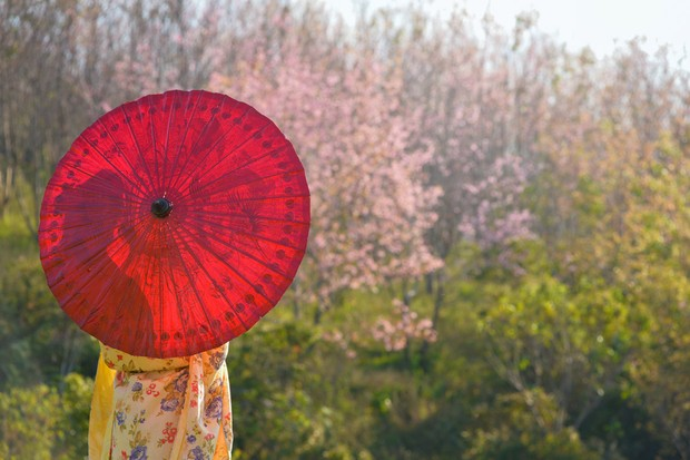 The joy of Japan: Top ten things to do with children