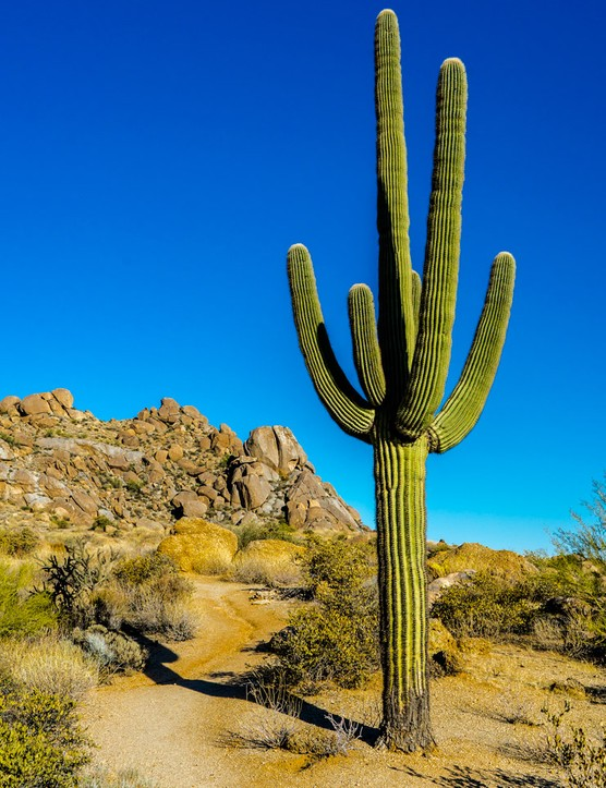Arizona, USA: Your family travel guide
