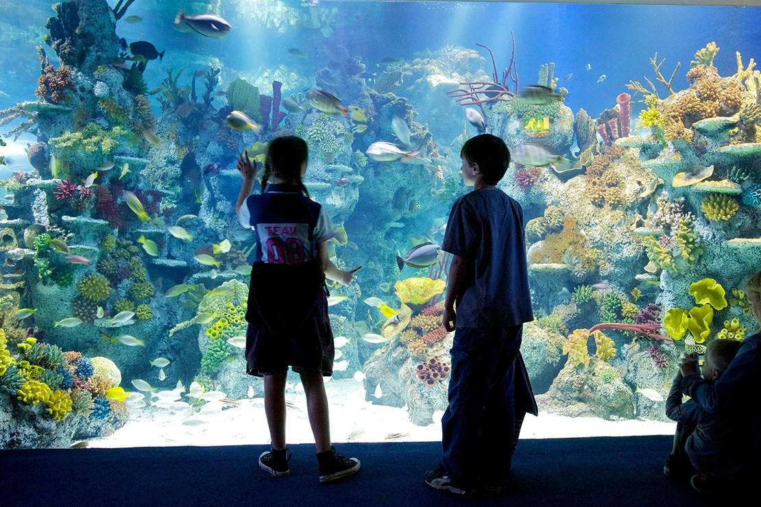 Bristol-Aquarium-giant-viewing-window-Custom