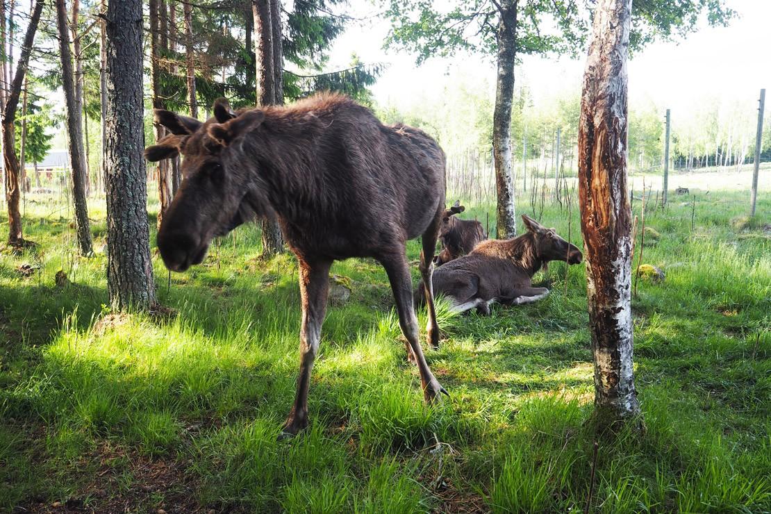 9 Ways to discover Småland, Sweden