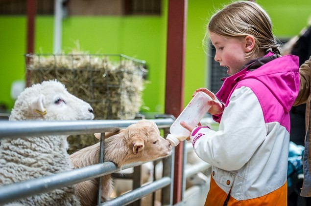A girl feeds the lambs at Cotswold Farm Park. (Pic by: Cotswold Farm Park)