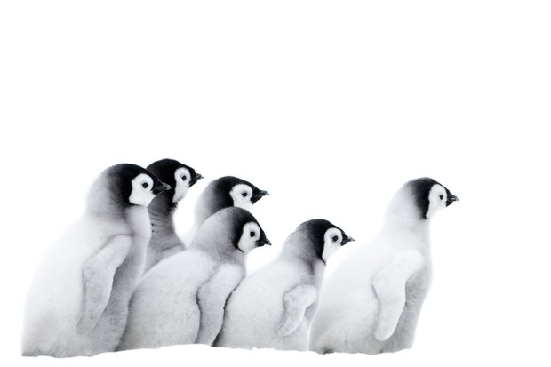 Five great reasons to watch March of the Penguins 2