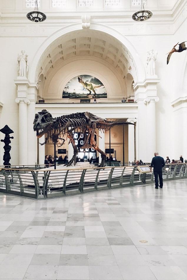 The Dinosaur Museum in Dorchester, Dorset
