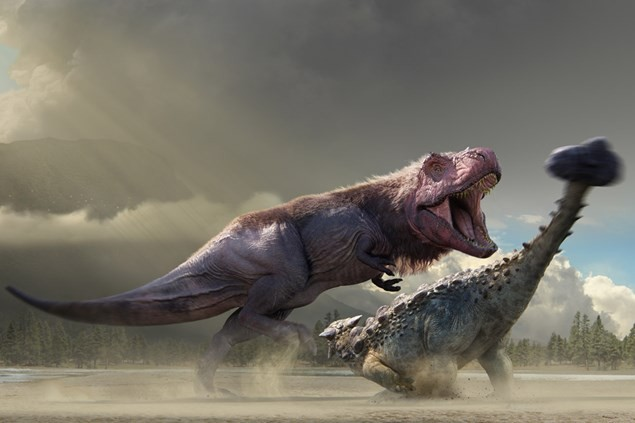 Dinosaurs in the Wild reveals a Tyrannosaurus fighting an Ankylosaurus