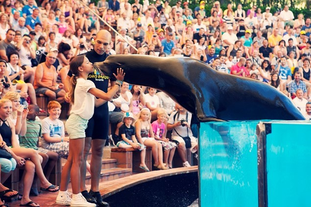 The sea lion show at Loro Parque. Photo: Tenerife Tourism Corporation