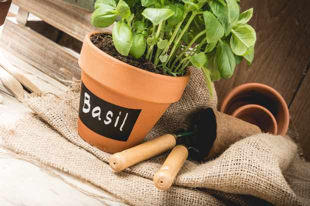 How to make herb pots