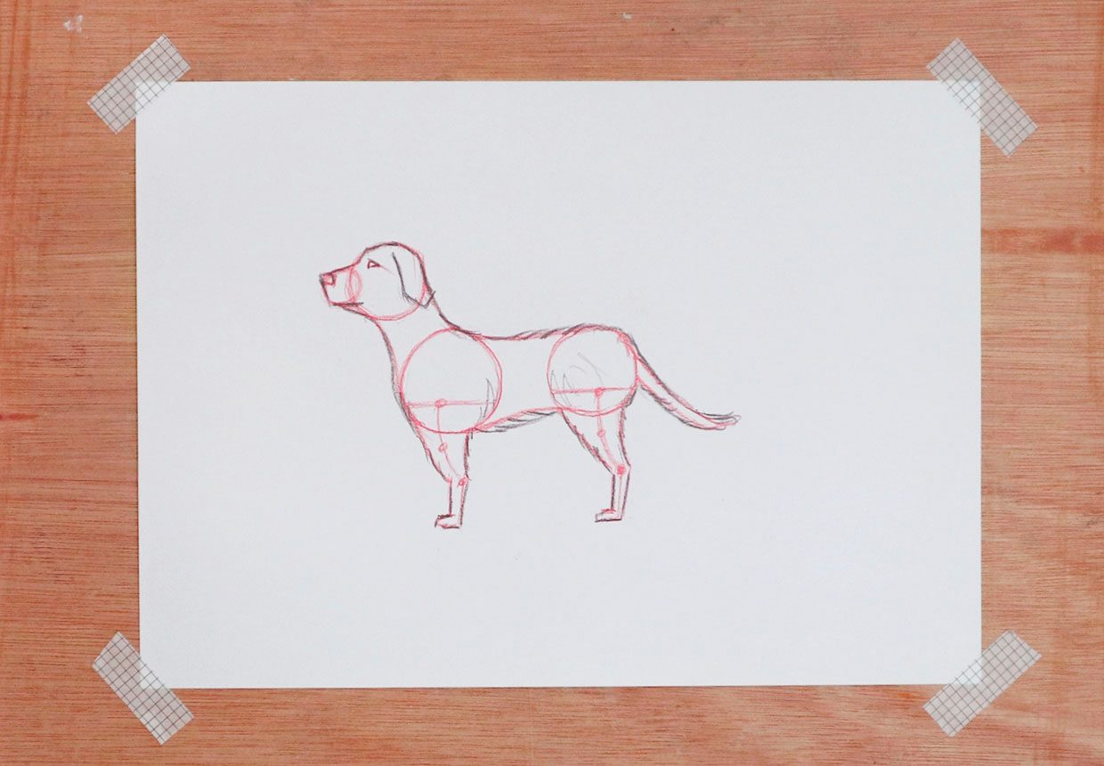 How to draw a dog step by step