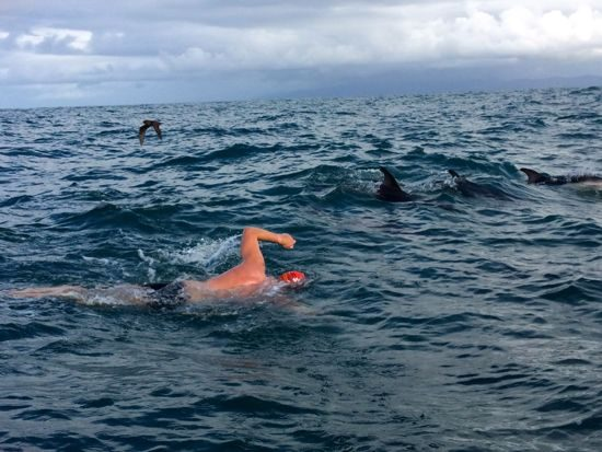 Swimming with dolphins in the Cook Strait