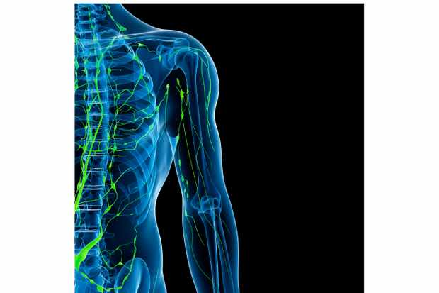 What is the lymphatic system and how does exercise affect it?