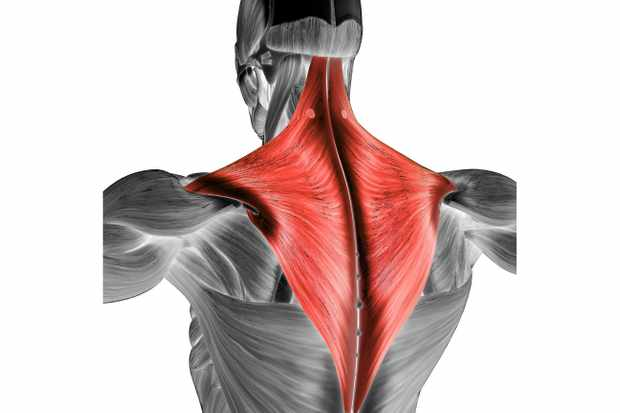 Trapezius muscle: What it does and how to keep it healthy