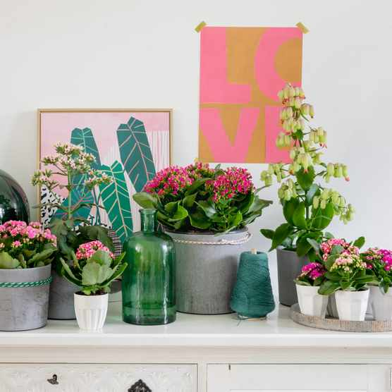 How to style your houseplants