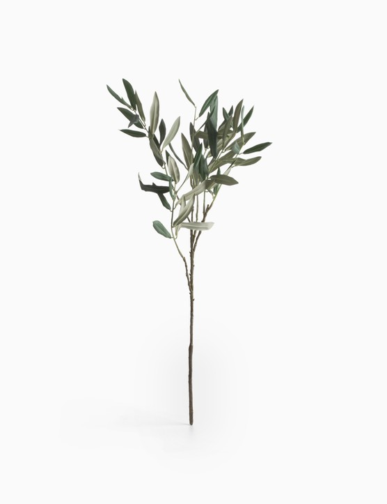 Premium olive branch by Hudson home, £14