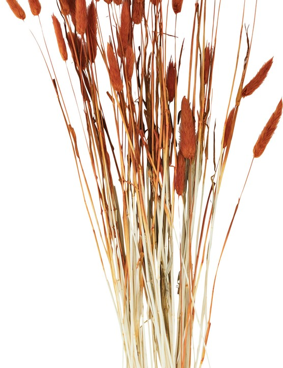 Lagurus ovatus, or hare's tail grass, in a terracotta hue