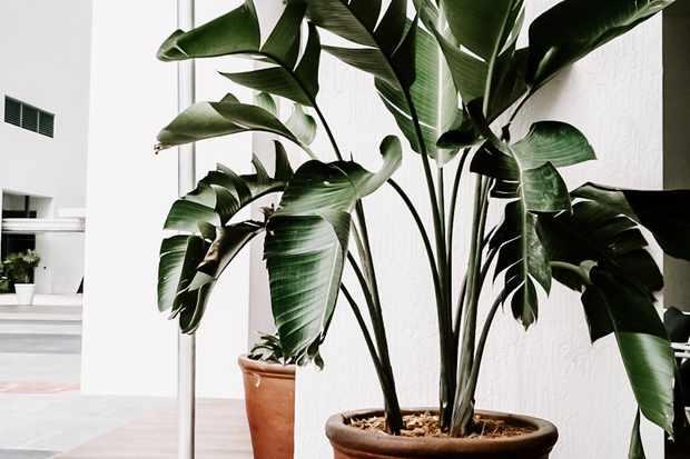 Houseplant pexels-julia-kuzenkov