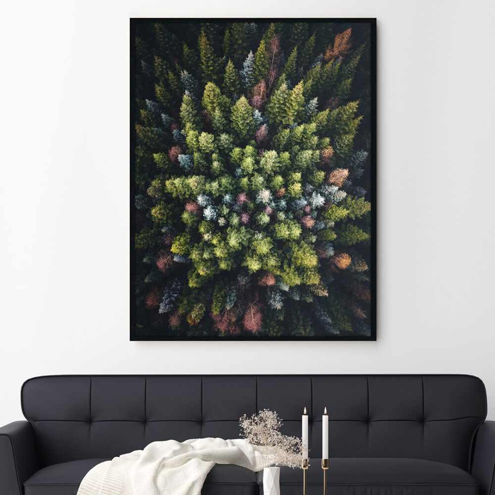 Colourful Conifers