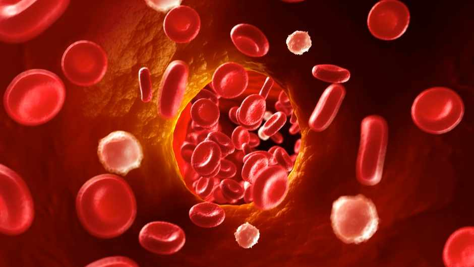 Is there any part of the body that doesn't have blood vessels? © Getty Images