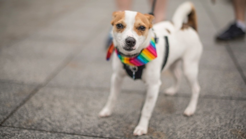 Are there homosexual animals? © Getty Images