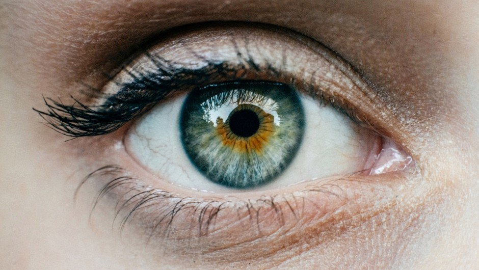 Which organism developed eyes first? © Getty Images