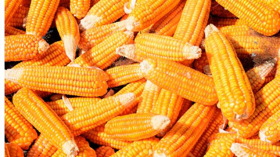 Why is sweet corn not digested? - BBC Science Focus Magazine