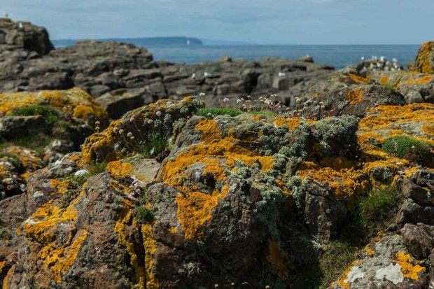 How does lichen reproduce? © Getty Images