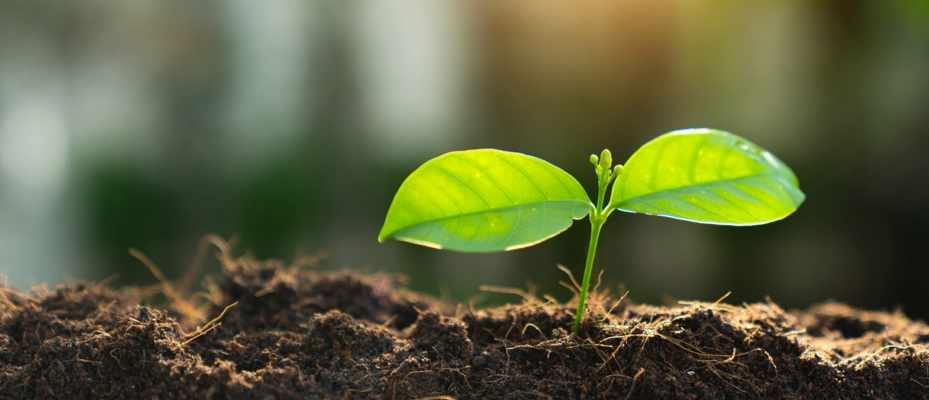 How do seeds know which way to grow? © Getty Images