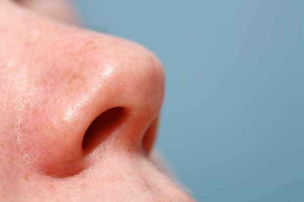 Why do we have a nose, rather than just two holes? © Getty Images
