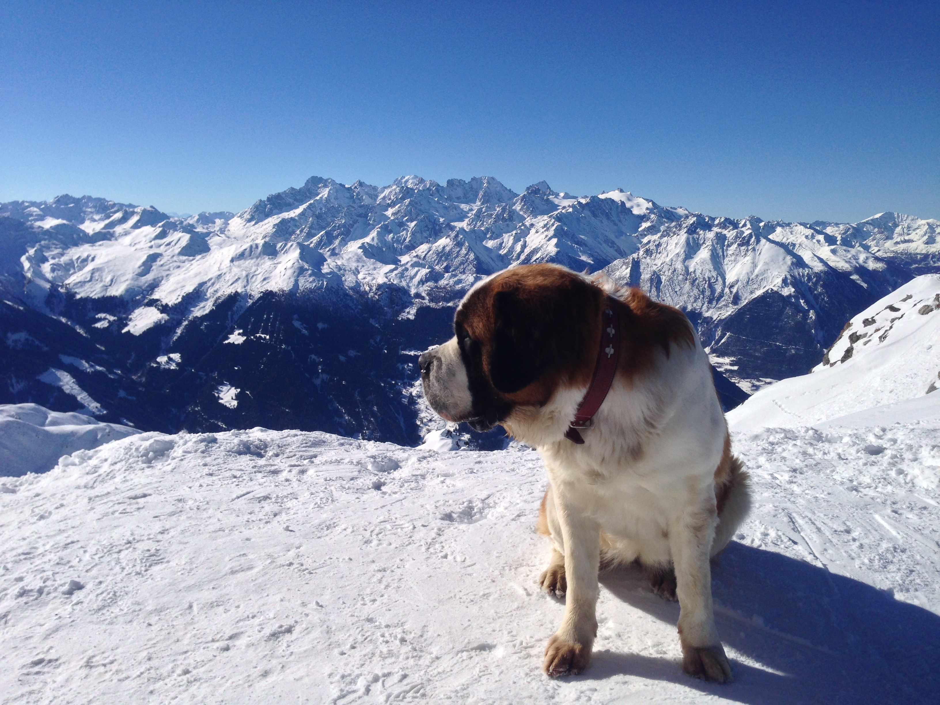 What do mountain dogs actually smell? © Getty Images