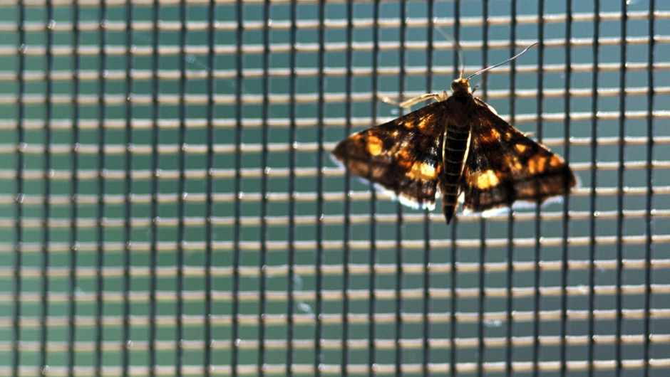 Why are moths attracted to lights? © Getty Images