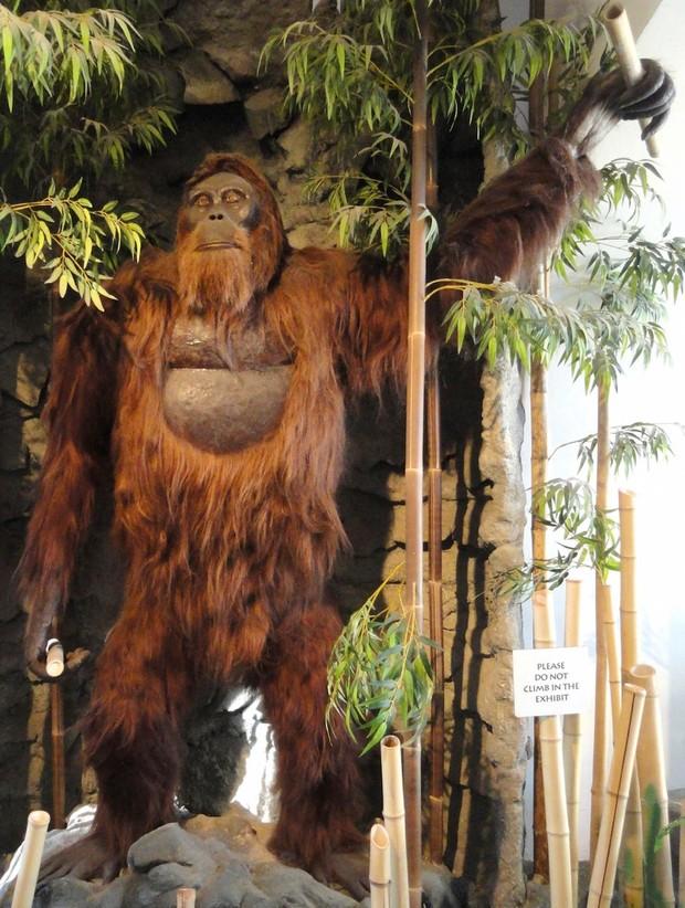 Gigantopithecus black Par Daderot, œuvre dérivée Jan Kameníček via Wikimedia Commons