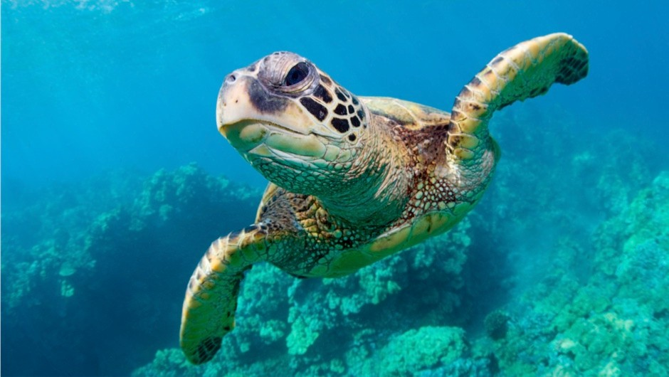How do turtles survive underwater? © Getty Images