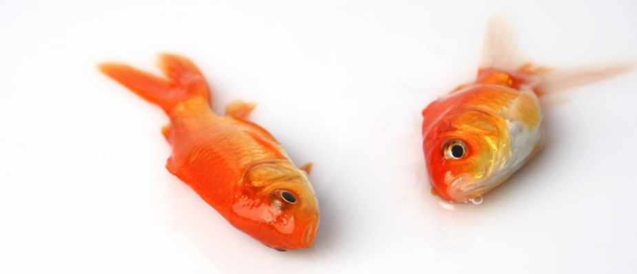 Why do fish float when they die? - BBC Science Focus Magazine