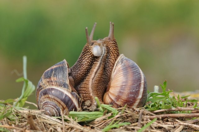 Snails © Getty Images