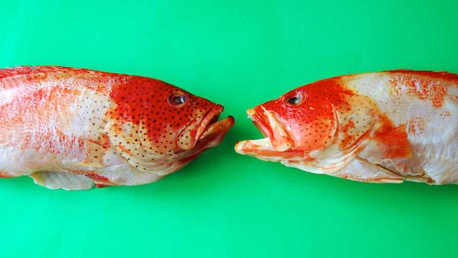 Do fish have tongues? © Getty Images