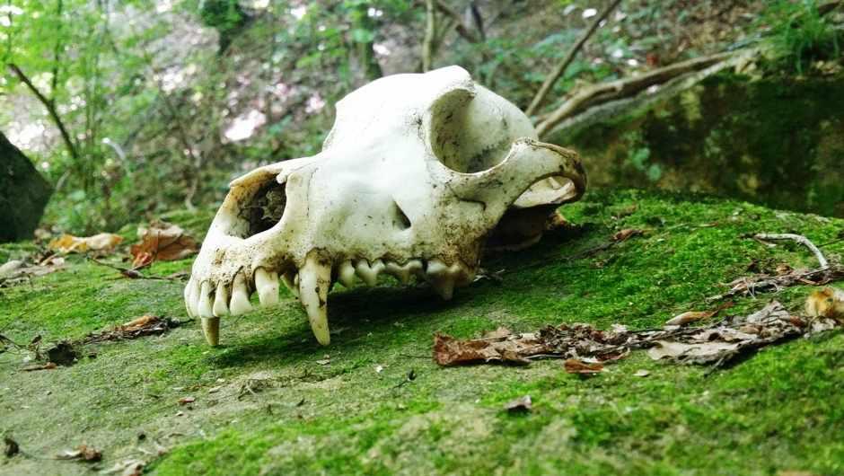 How do animal bones decompose? © Getty Images