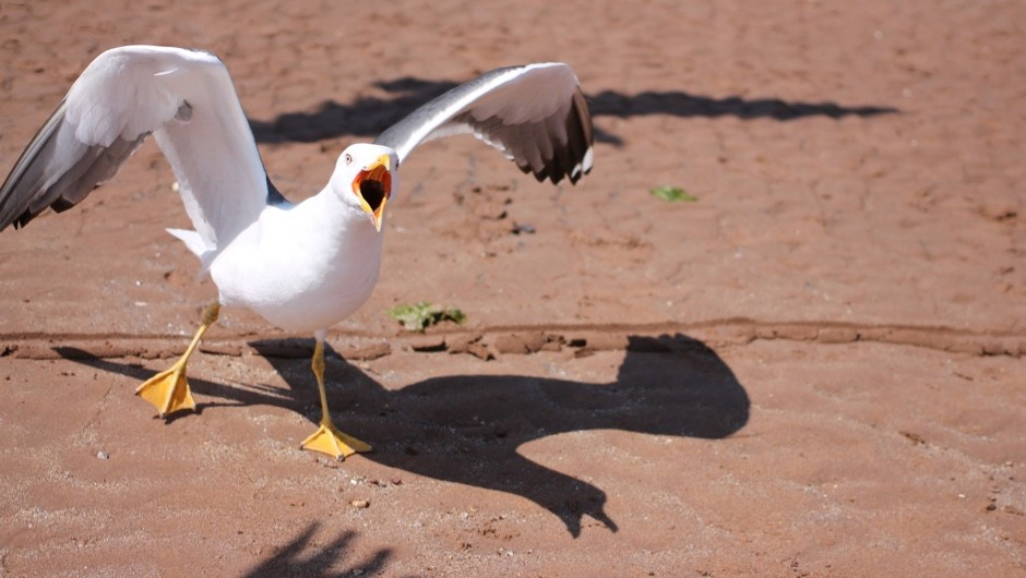 Are seagulls getting more aggressive? © Getty Images
