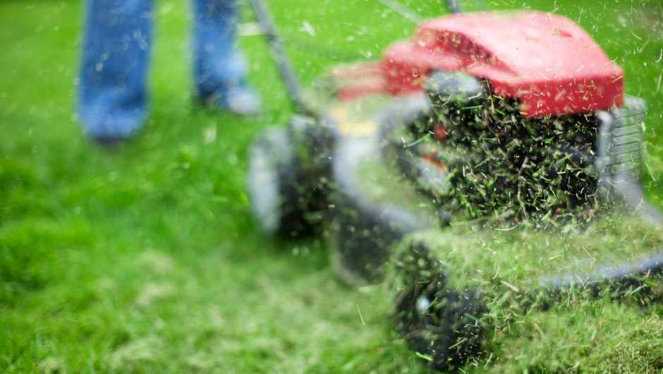 Why does cut grass smell so good? © Getty Images