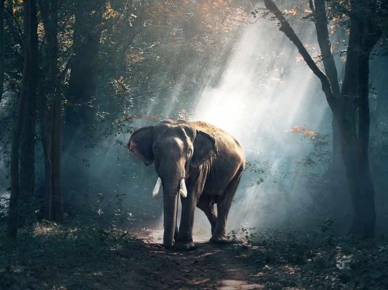 How intelligent are elephants?