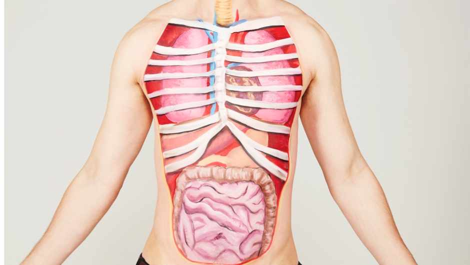 Top 10: What are the heaviest organs in the human body? © Getty Images
