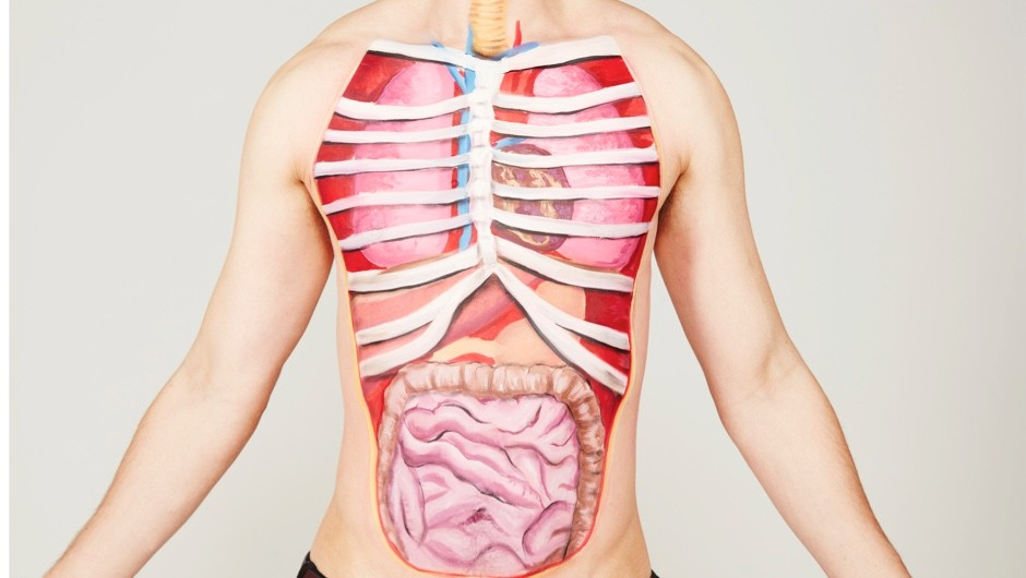 Top 10 What Are The Heaviest Organs In The Human Body Bbc